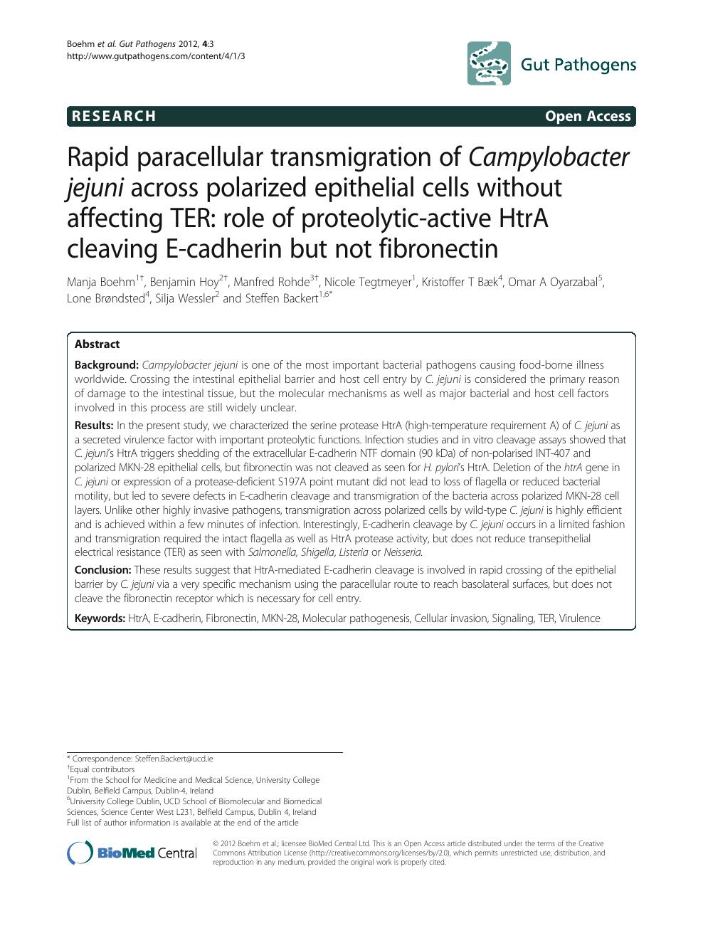 Rapid paracellular transmigration of Campylobacter jejuni across