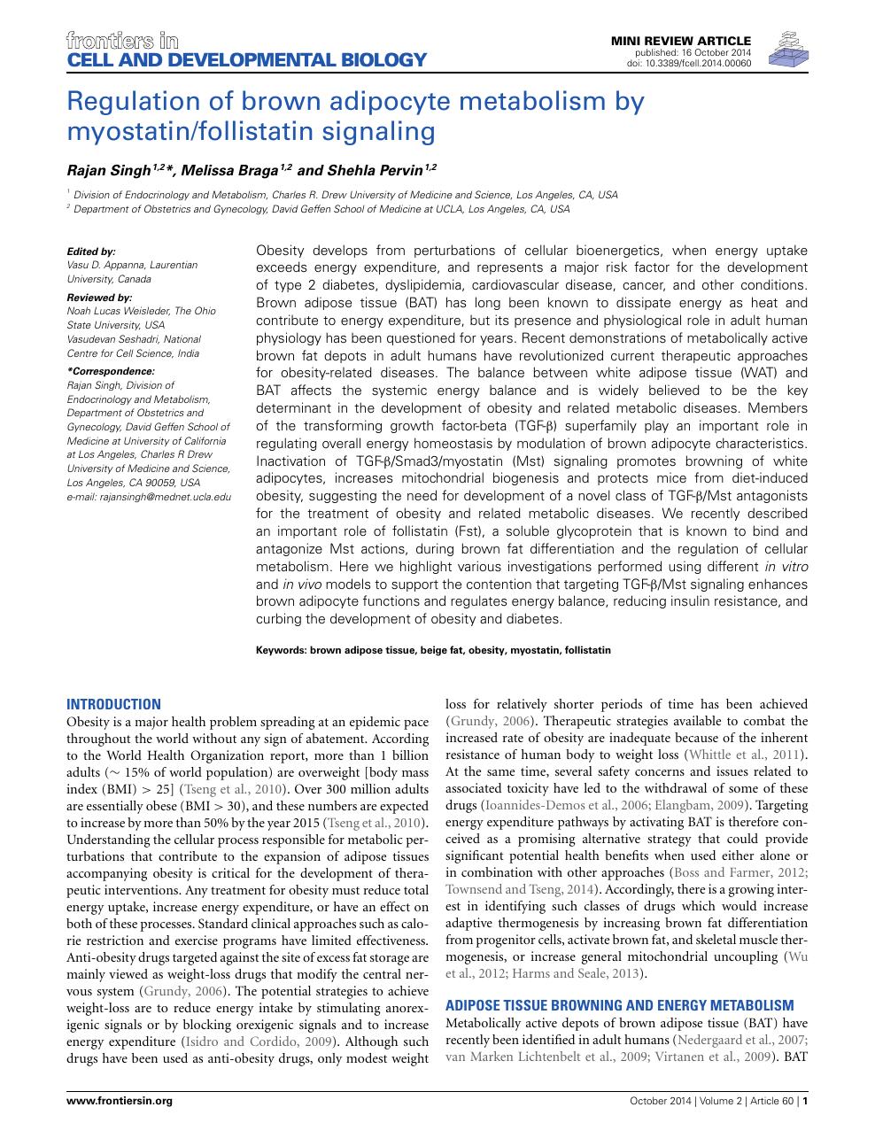 Regulation of brown adipocyte metabolism by myostatin
