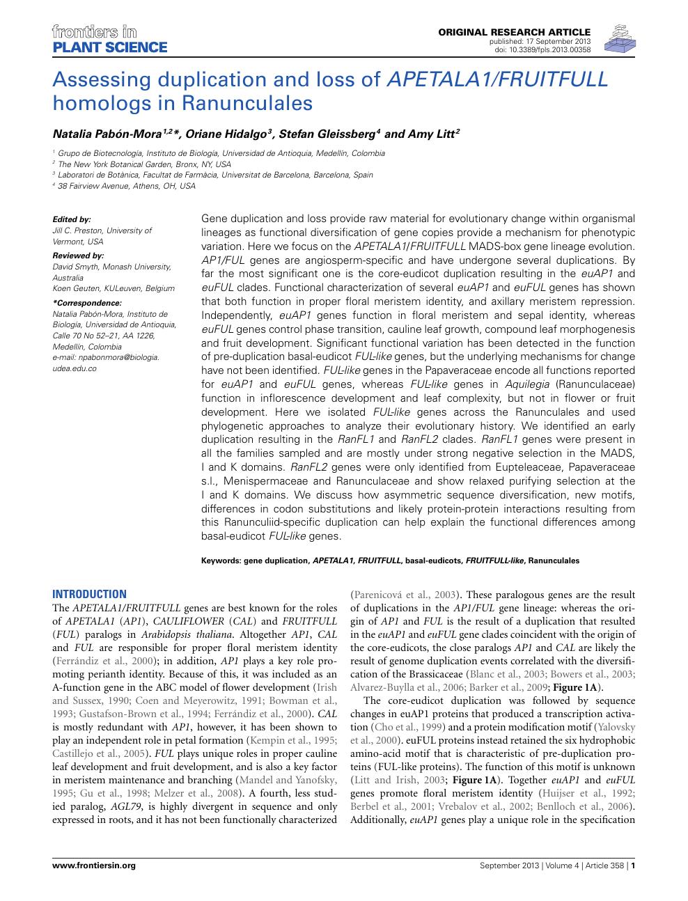 Assessing duplication and loss of APETALA1/FRUITFULL