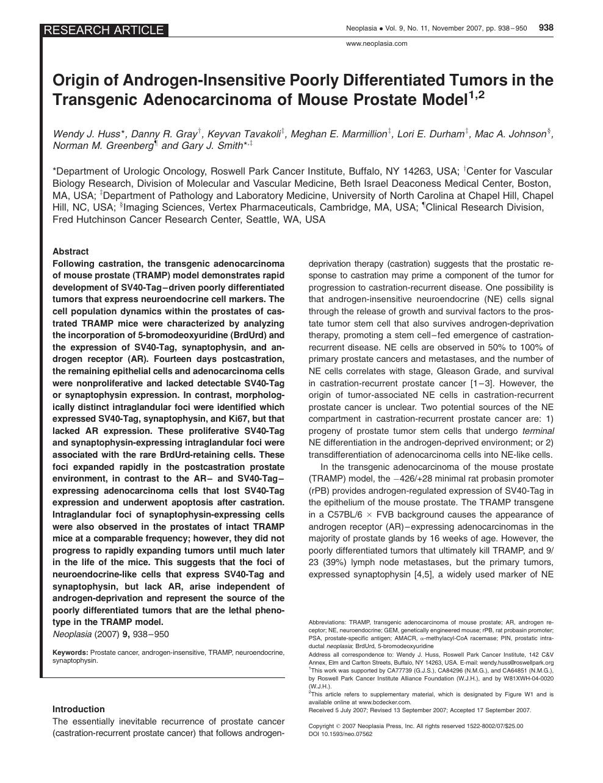prostate pro aktiv schutz
