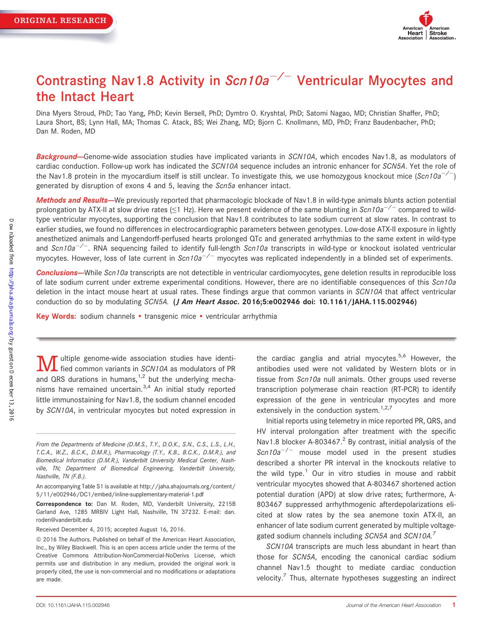 Contrasting Nav1 8 Activity in Scn10a −/− Ventricular Myocytes and