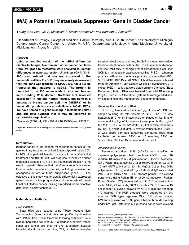 MIM, a Potential Metastasis Suppressor Gene in Bladder
