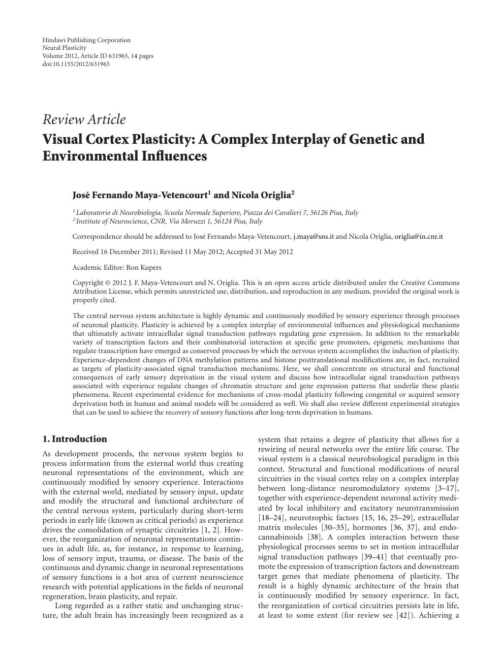 neuroplasticity essay