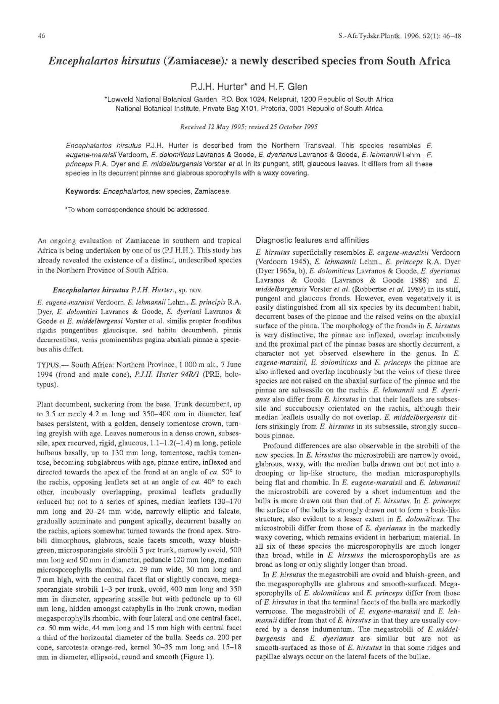 Encephalartos hirsutus (Zamiaceae): a newly described species from