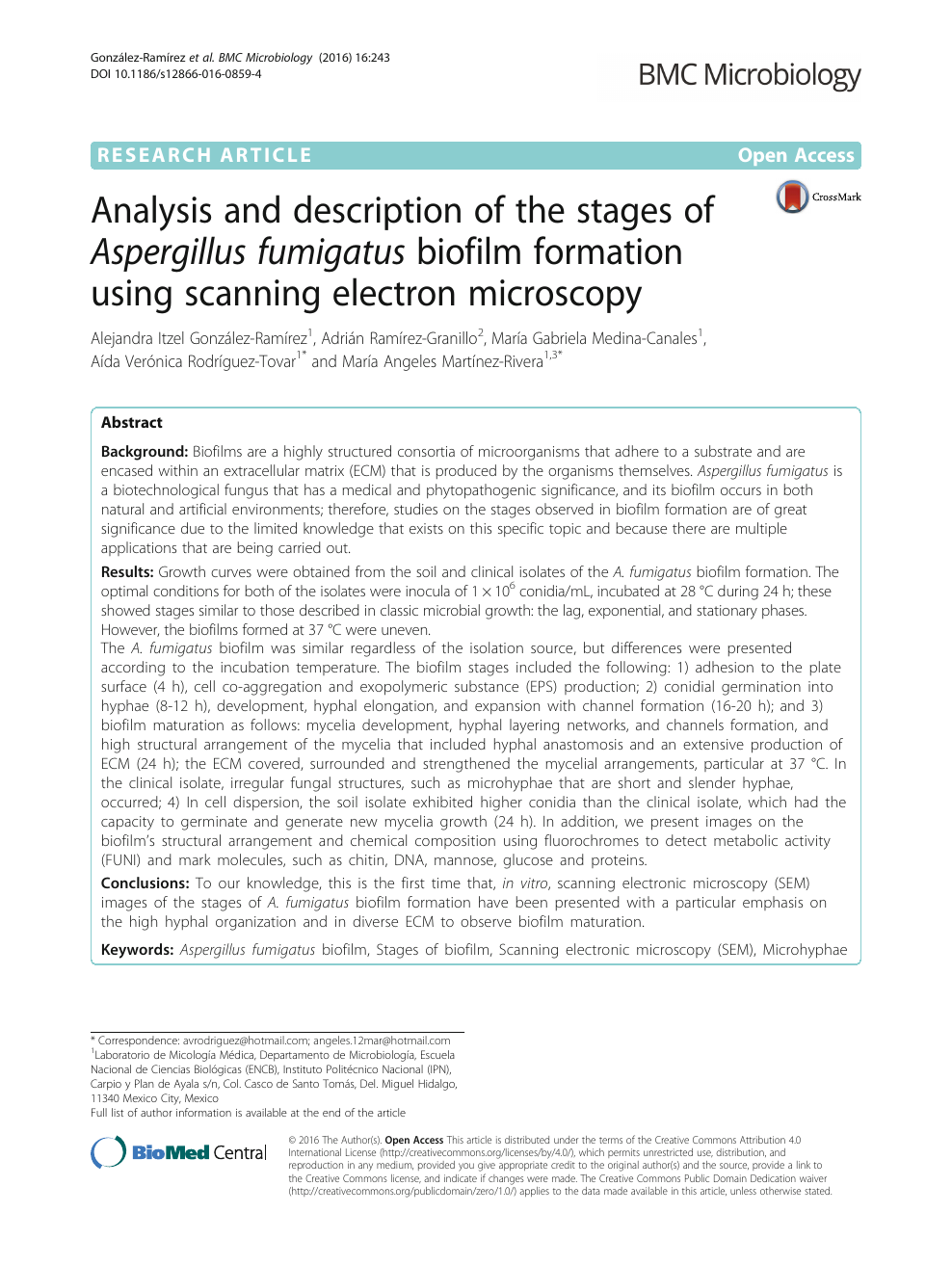 Analysis and description of the stages of Aspergillus